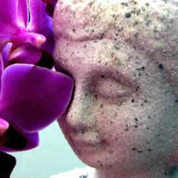 400-267-Buddha-Augen-vor-Orchidee